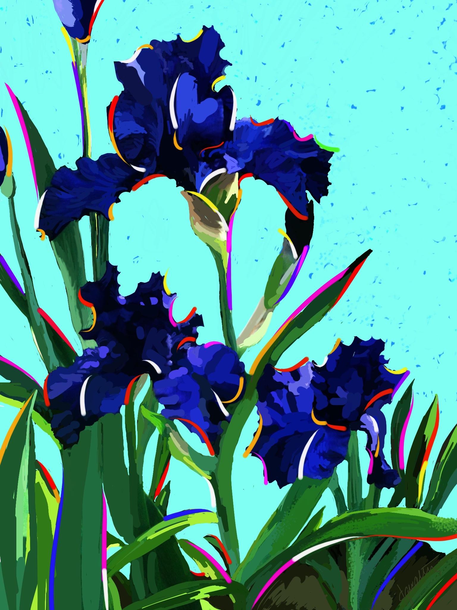 Color Me Iris