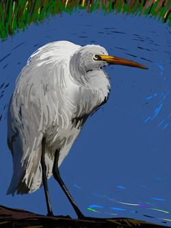 The Pond Watcher