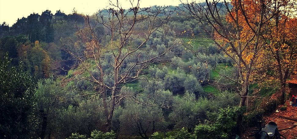 Tananei olive trees valley