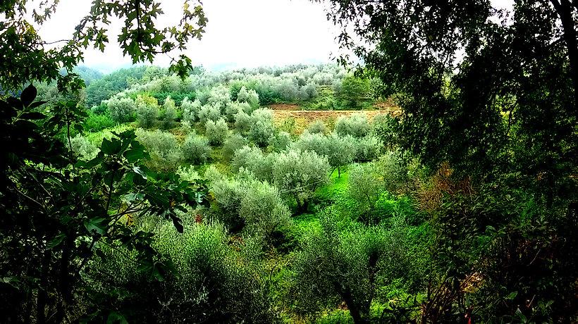 Valle di Olivi del Tananei