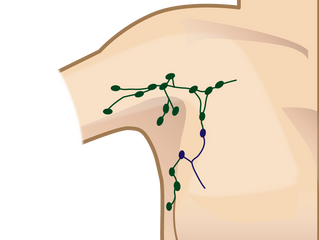 鍼治治療の効果~血流増加編⑨~リンパ節