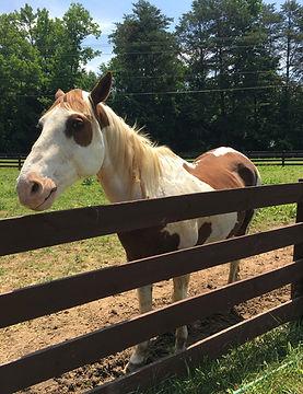Horse Farm, Event Center, Riding Lessons