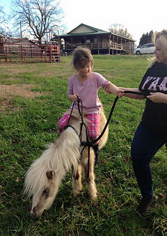 Miniature Horses at Still Water Farm - Horse Ranch - Summer Camp, Riding Lessons