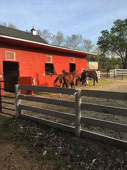 Red barn and horses at Still Water Farm - Horse Ranch