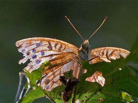 Gespräch mit einem Schmetterling