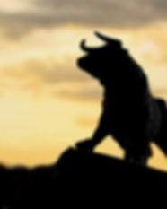 bull 1.jpg