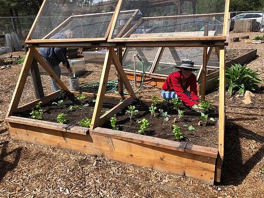 growing food.JPG