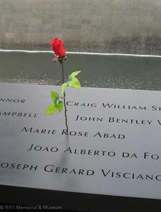 memorial rose CR 911 MM.jpg