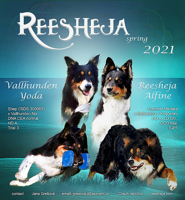 Finka&Yoda_poster_2.jpg