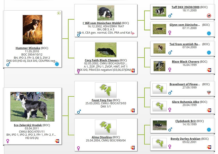 border collie pedigree