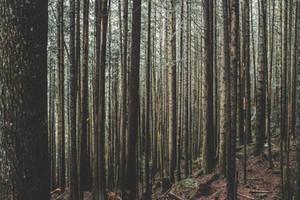 SupaThink: Refocus on Stewardship