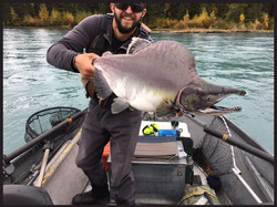 Kenai River Salmon