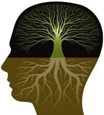Neuroplasticidade: o que é?