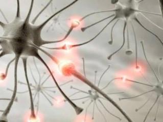 O que são os neurônios?