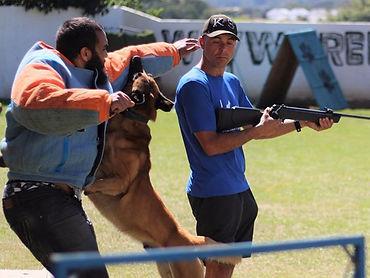 Canil K9 - Exercicios para cães