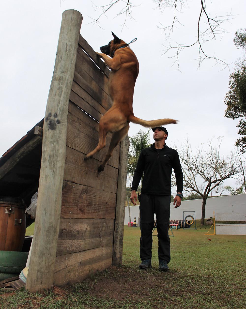 Marcel Piacentini Abrantes , chegou no nível mais Avançado no esporte com o Cão da Foto Rock
