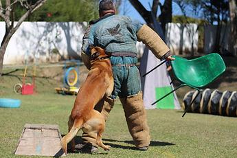 Canil K9 - Cão de guarda
