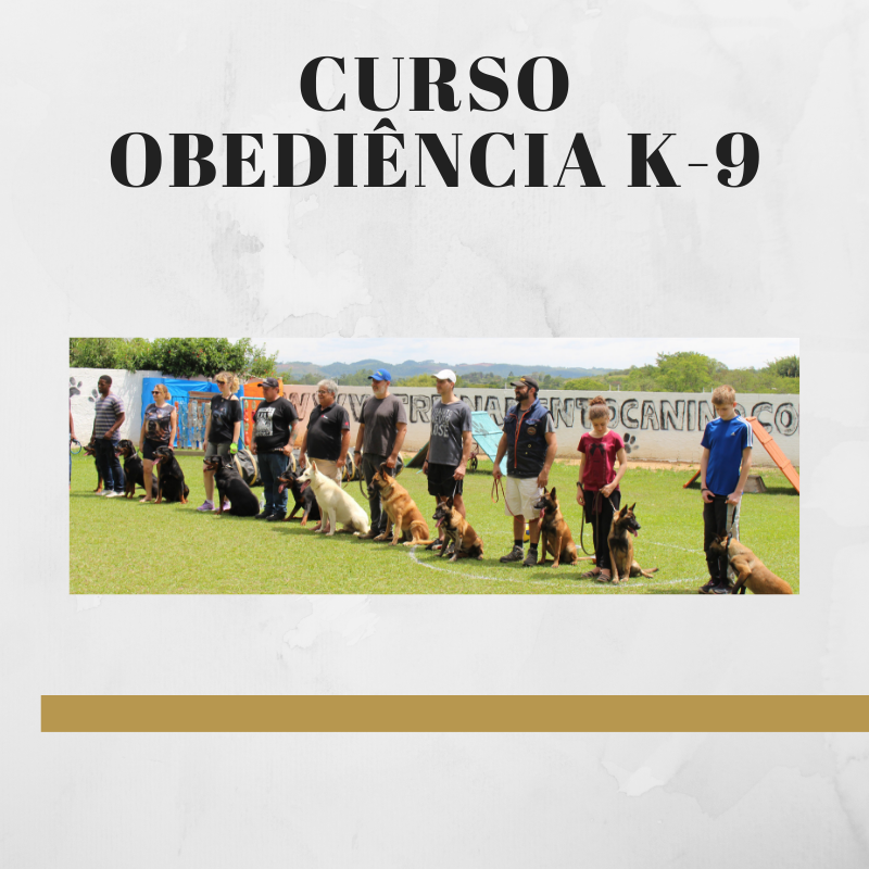 CURSO NO CANIL K-9 CÃO EDUCADO