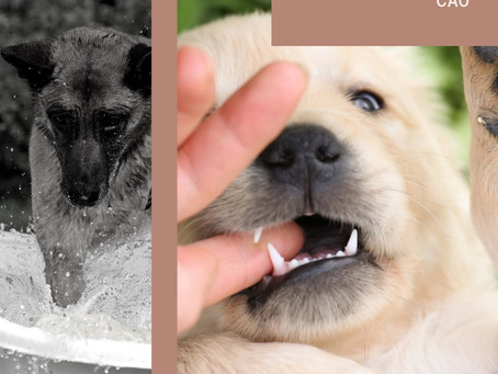 Escolhendo seu cão
