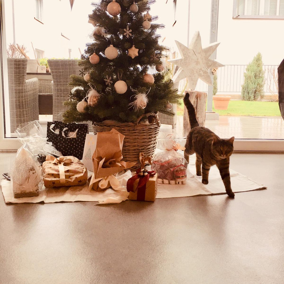 Katzen-Weihnachten