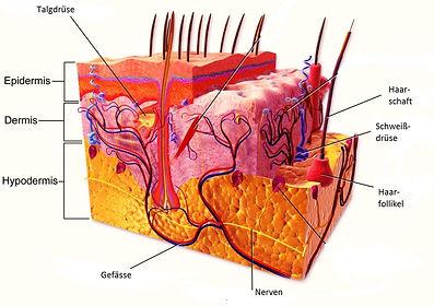 Hautaufbau