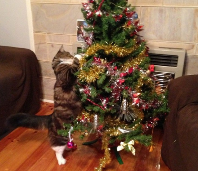 ¿Es tu gato un grinch? Ataques a los árboles de Navidad