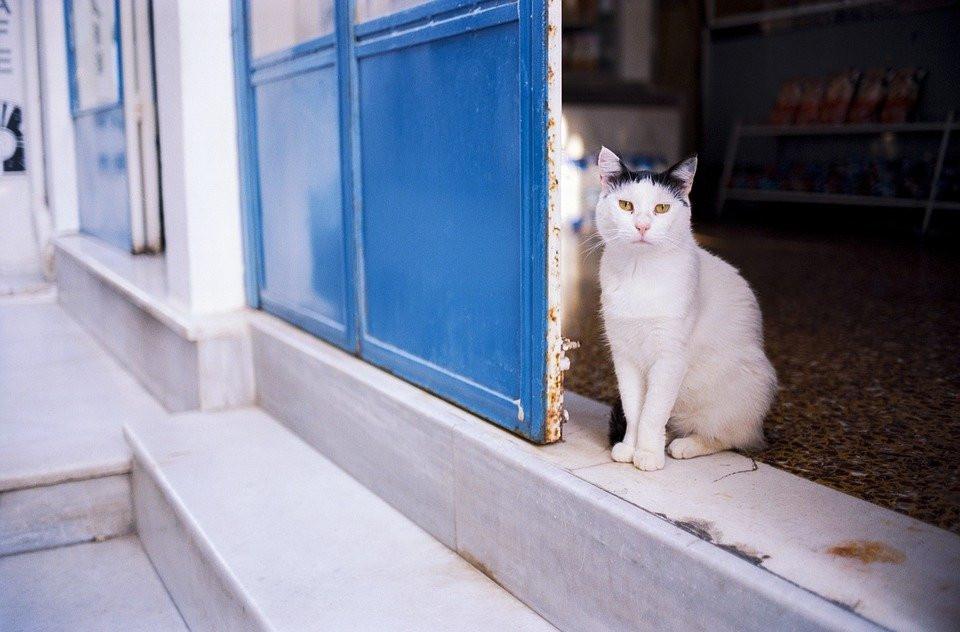 Gato, Mascota, Animales, Calle, Grecia, Ios, Cyclades