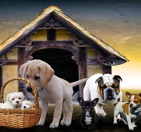 Adoptar un perro, si tienes hijos. ¿Qué raza me conviene?