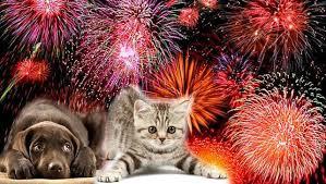 ¿Cómo calmar a las mascotas cuando hay fuegos artificiales?