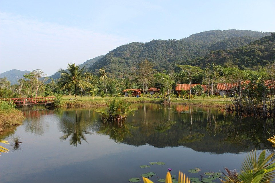 Lago, Selva, Palmeras, Río, Palm, Tropicales, Árbol