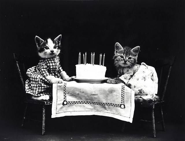cumpleaños mascotas mad magazine pelos patitas