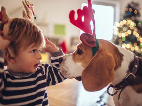 """Navidad y """"perrhijos"""", ¡Una combinación bomba!"""