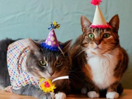 ¡Feliz día internacional del gato!
