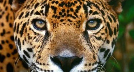 Memorias del águila y el jaguar, trilogía de Isabel Allende