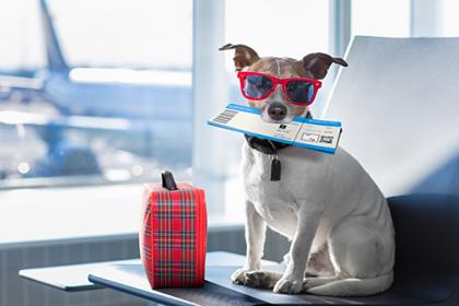 ¿Planeas viajar con tu mascota?