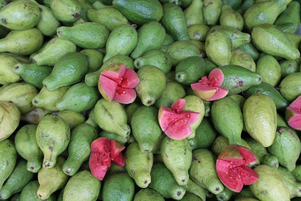Guayaba, Frutas, Saludable, Verde, Imagen Gratis