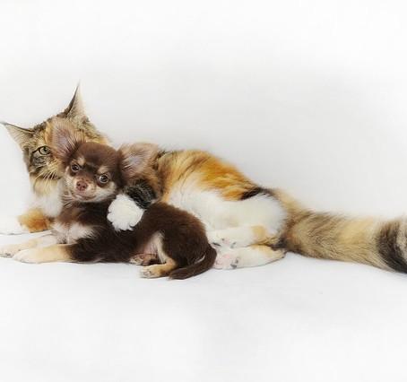 Cuidando a tus mascotas durante el brote de coronavirus