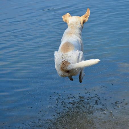 Cómo cuidar a tu mascota en verano