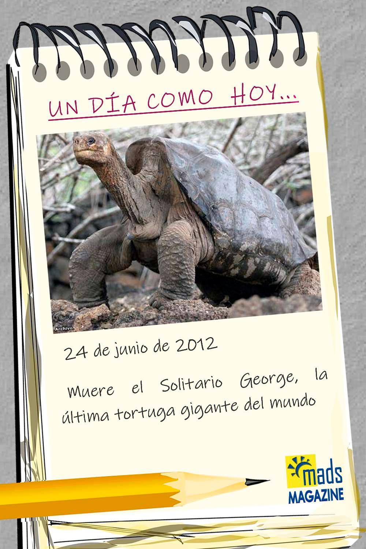 Tras varios intentos fallidos, el Solitario George murió sin descendencia. Era el último superviviente de las imponentes tortugas Pinta