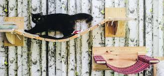 Adaptación del hogar para tus gatos