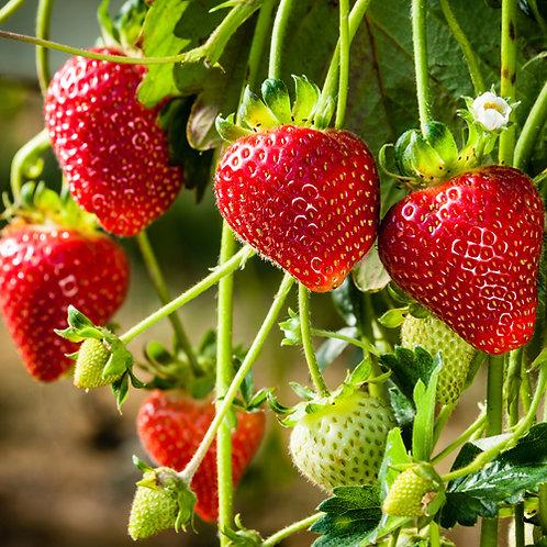 Strawberry Adina