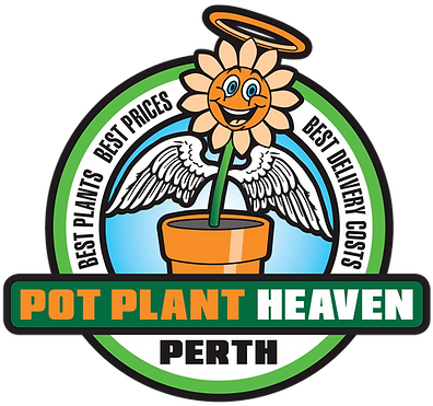 PPHP-Logo-FINAL-for-Website.png