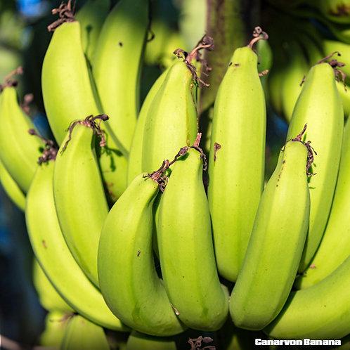 Carnarvon Banana