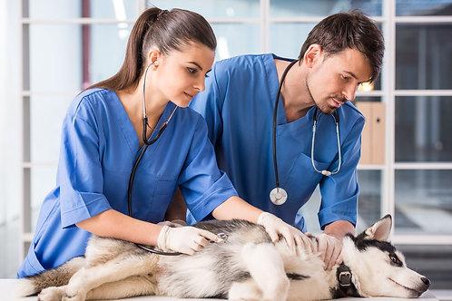 Assistente Medicina Veterinária