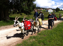 Jura-Trekking