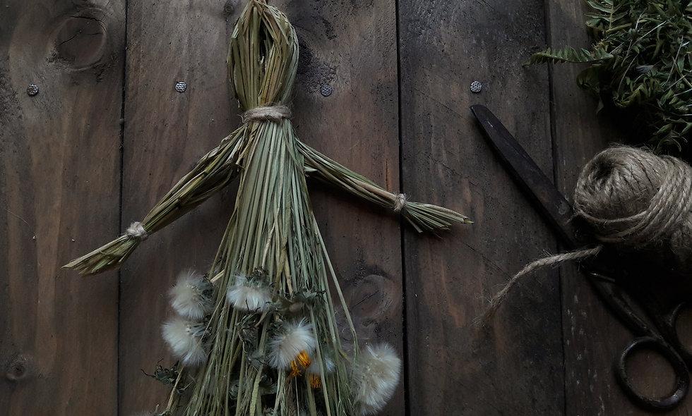 Bambola  in Erba Codola e Scuderi Comune.
