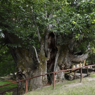 Castiñeiro Pumbariños