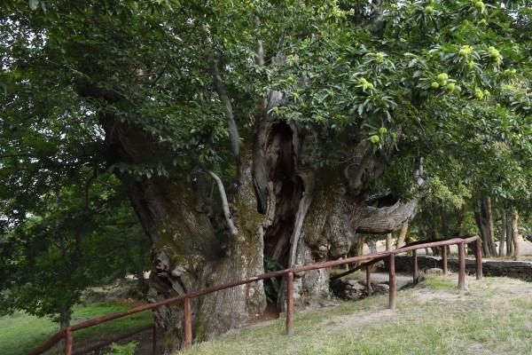 pumbariños-actividades-rutas-senderismo-cabeza de manzaneda-turismo activo