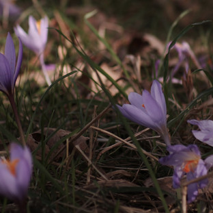 Flores en Manzaneda