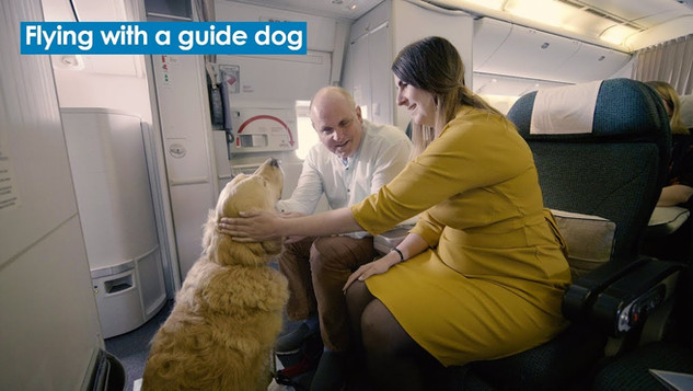 Flying with a guide dog